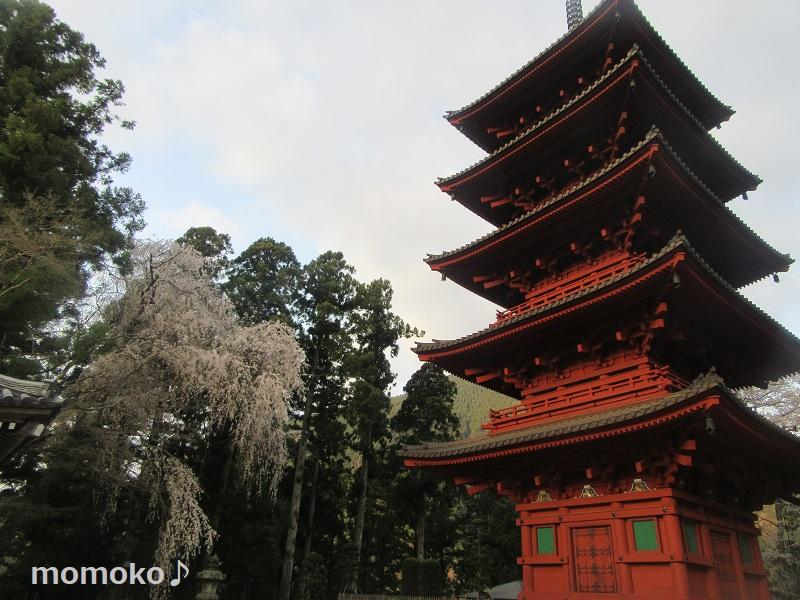 久遠寺の枝垂れ桜と五重塔