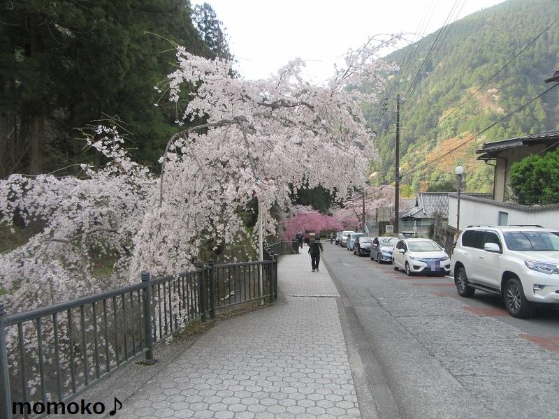 久遠寺の道路は混雑!