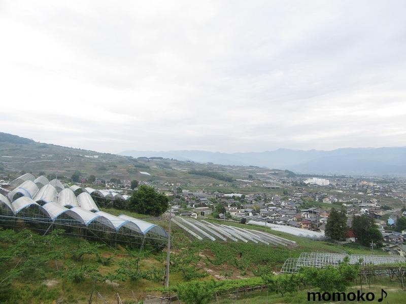 大沢農園から見た景色