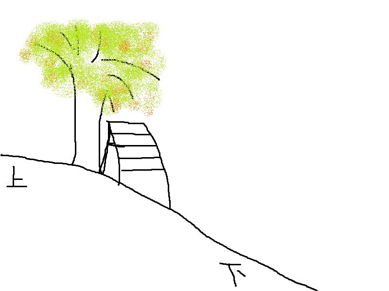 さくらんぼ農園での脚立