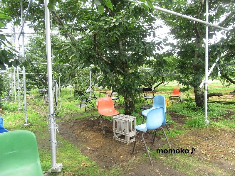 中込農園さんの桃を食べる場所